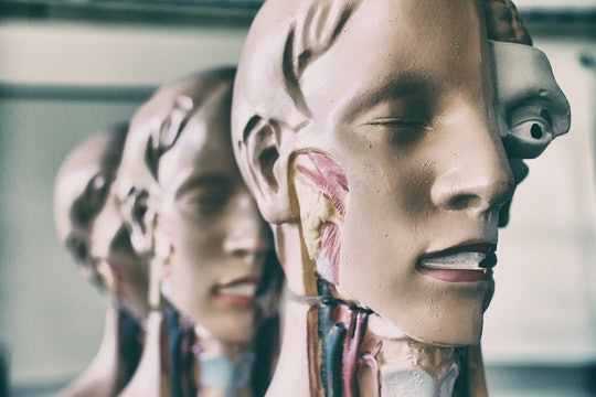Training mannequins showing human head and neck anatomy