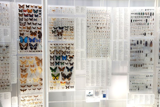 a wall of pinned insects in a museum
