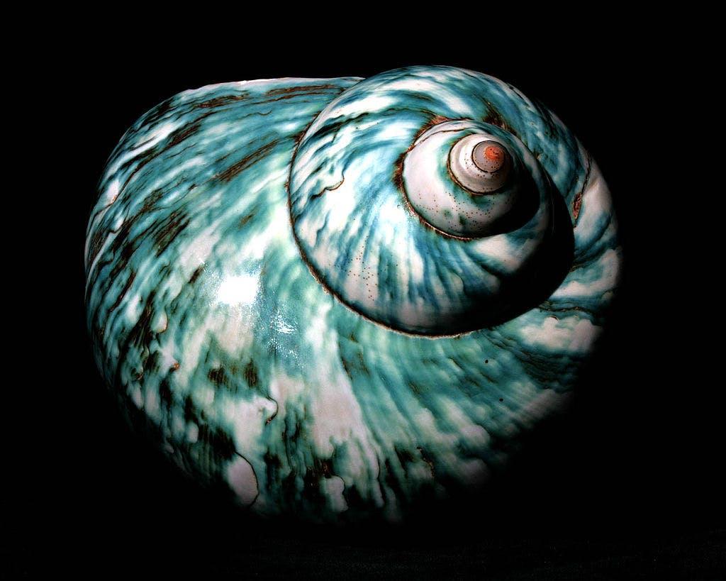 white and blue shell Madagascar