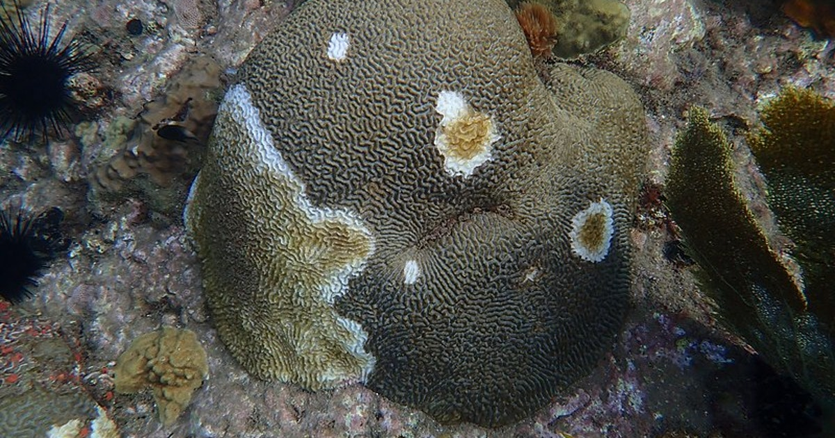 New evidence implicates container ships in the spread of stony coral tissue loss disease