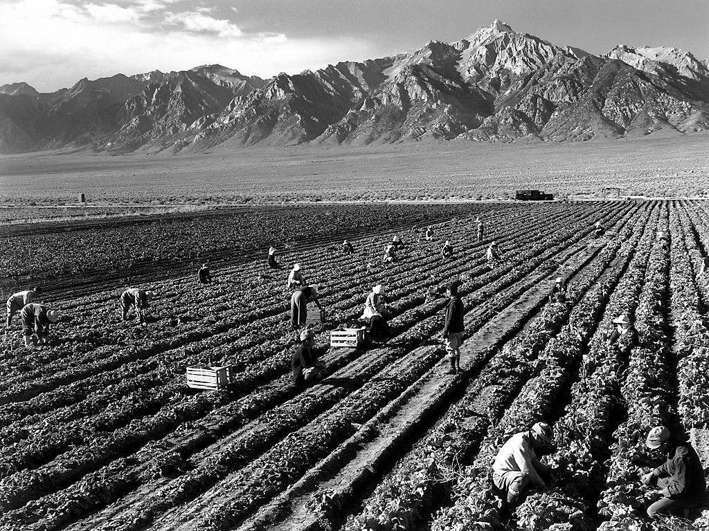 black and white photo of farm workers in front of a large mountain