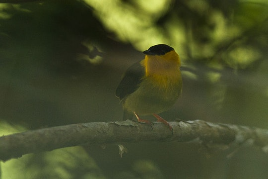 a yellow and black bird in tree shadows