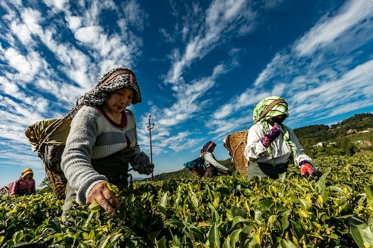 close up of women working on a farm in southeast asia