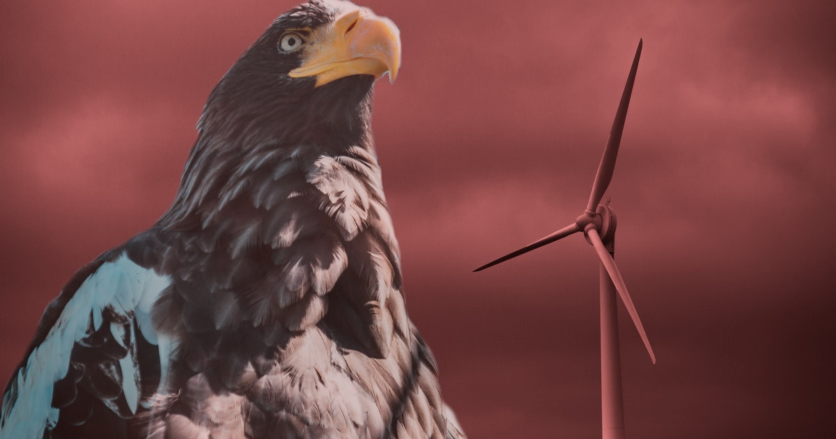 Painting the blades of wind turbines helps birds avoid them