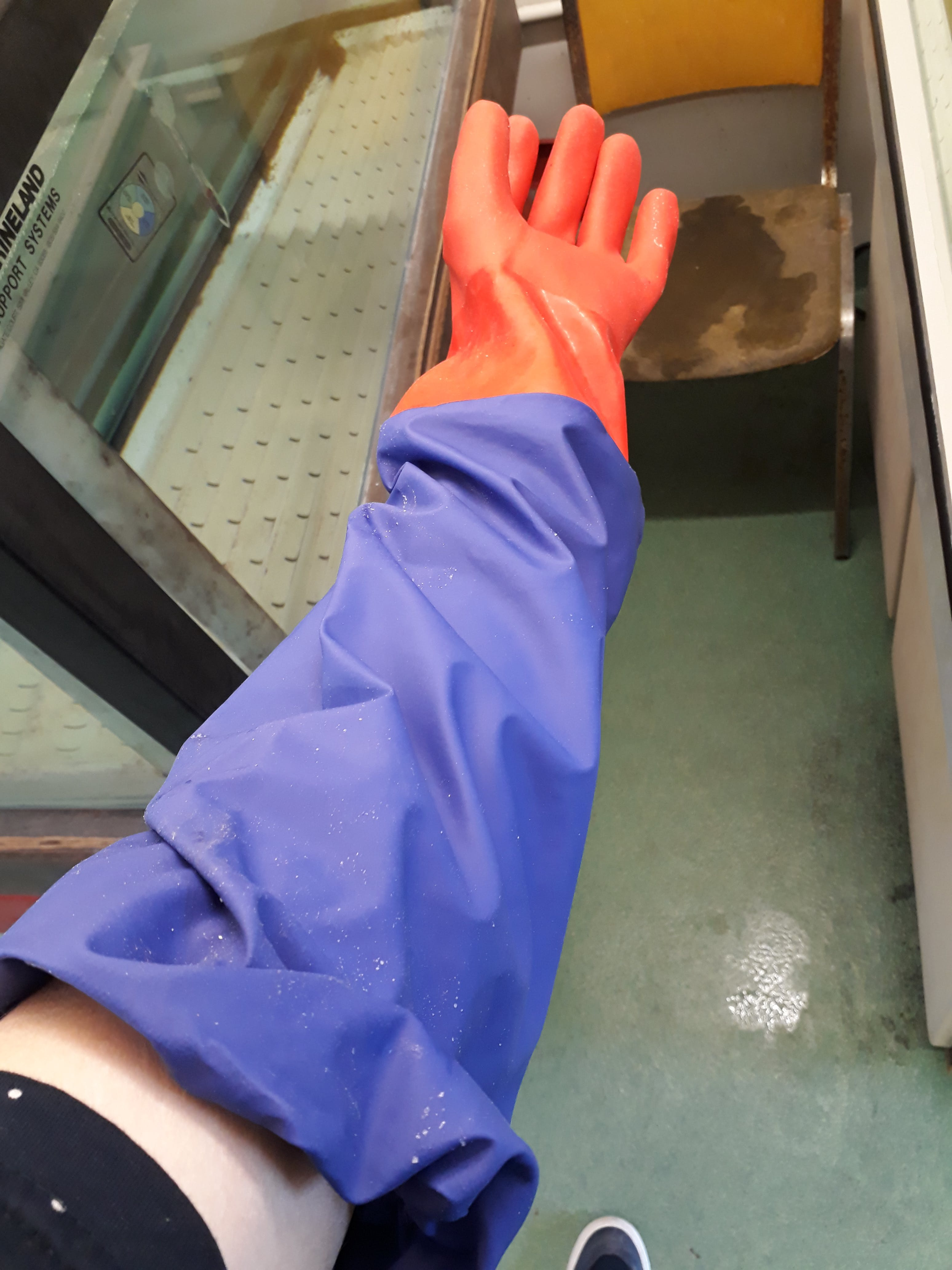 A shoulder length rubber glove used in a research lab to reach into fish tanks. If contaminated, would be thrown in the garbage.