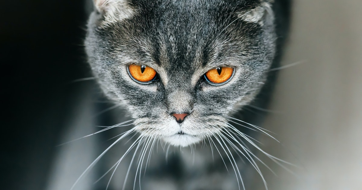 Feral cats' hunting abilities make them particularly effective predators, even when prey see them