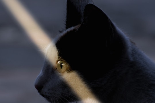A beam of light falls across a cat's eye