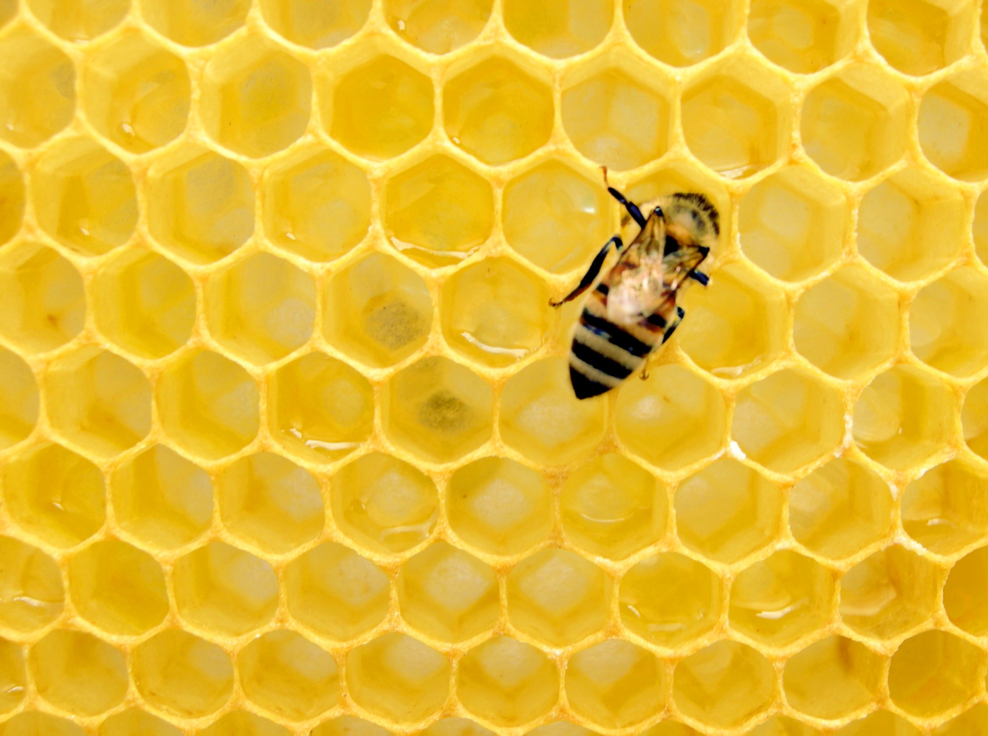 a bee against bright yellow honeycomb