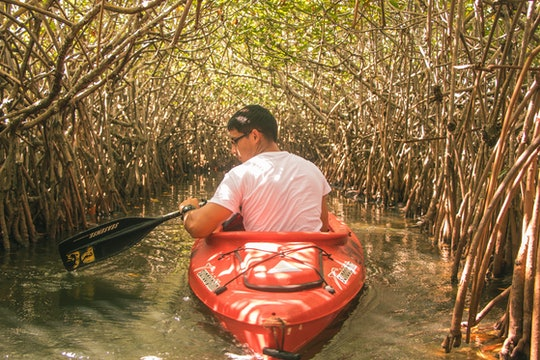 a man in a small boat passes through mangrove trees