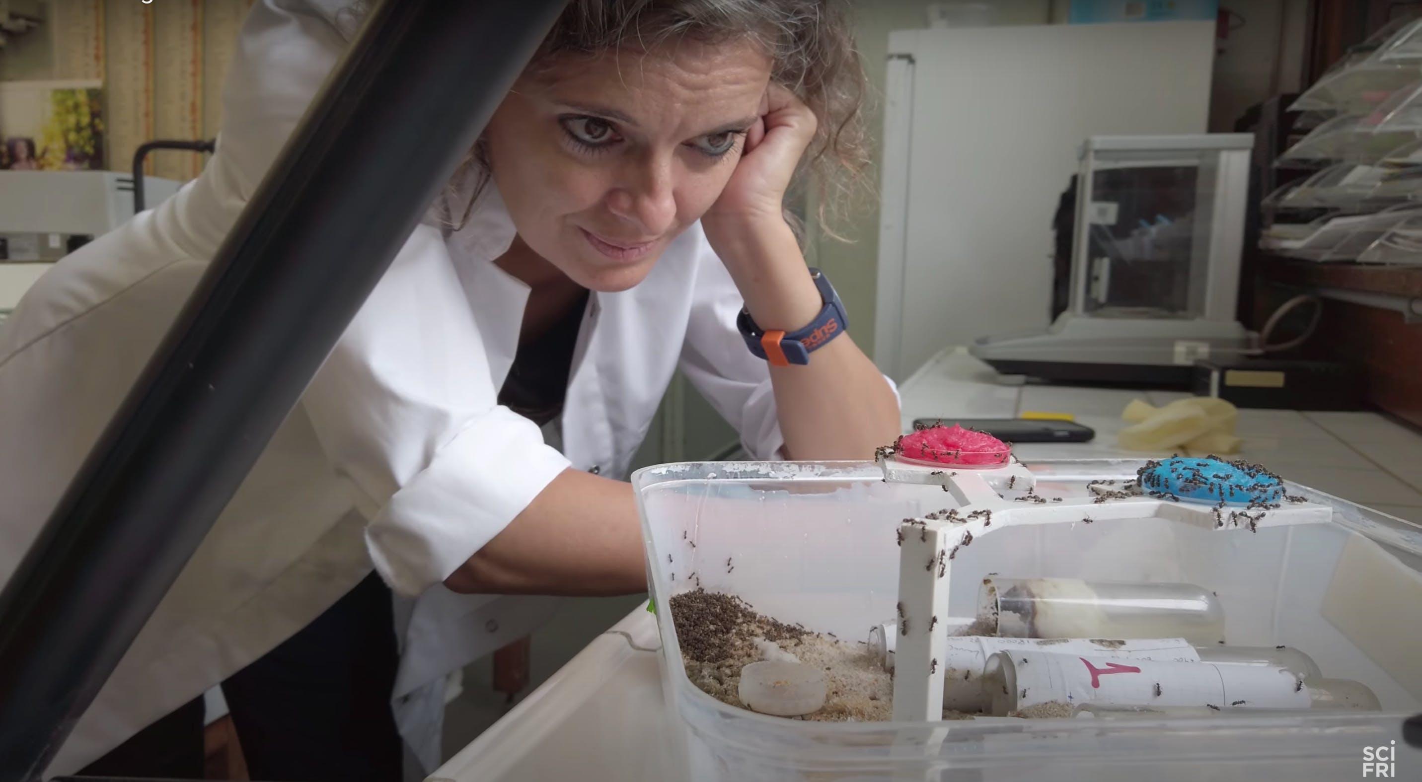 Dussutour observes an ant experiment