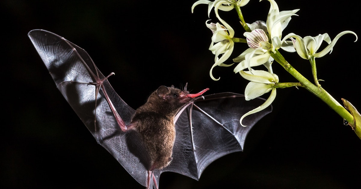 Bats incur fewer DNA changes as they age, which may explain their relatively long lifespans