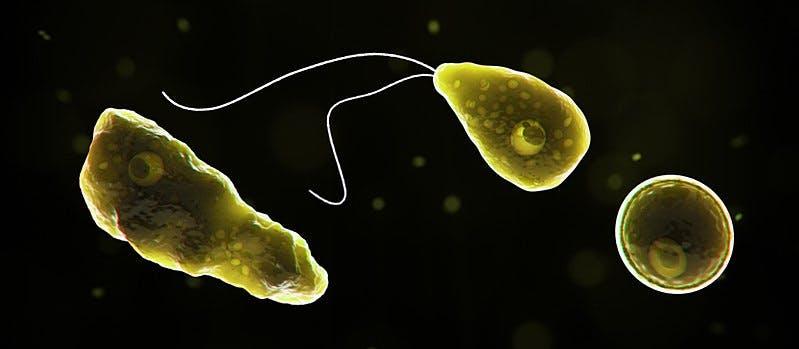 microscope photo of amoeba on a black background