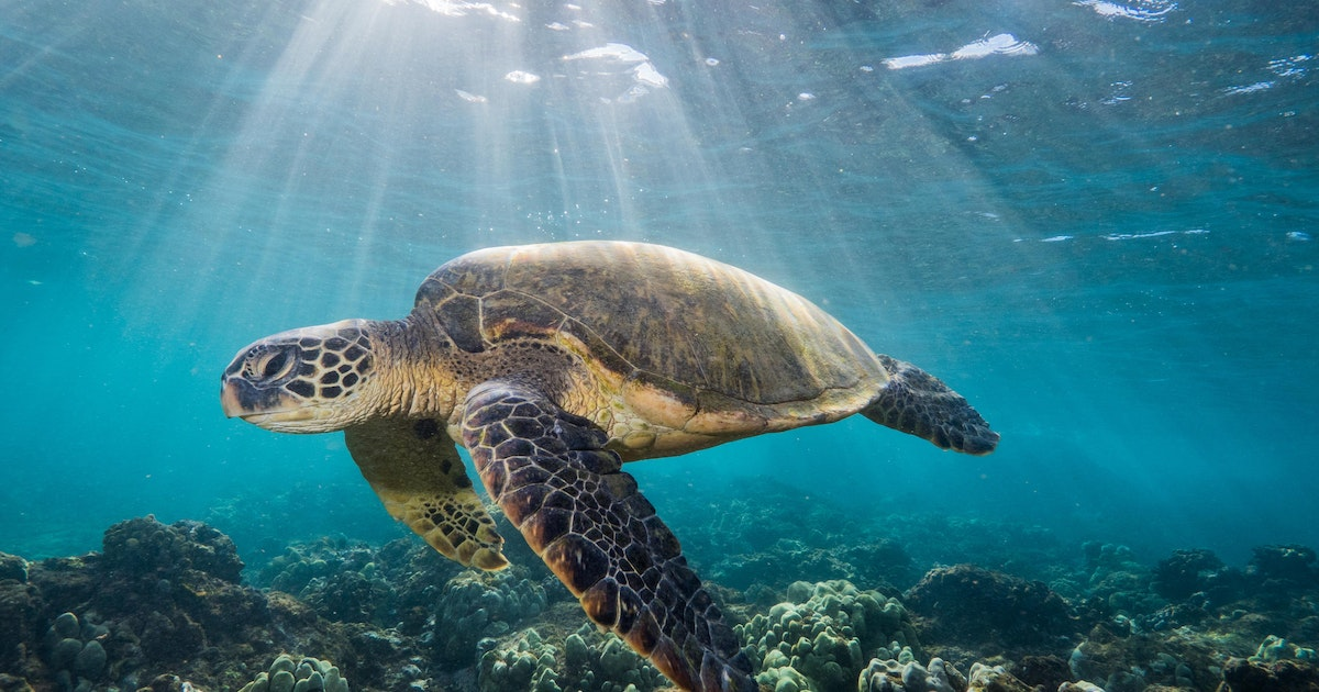 The US-Mexico border is making life complicated for green sea turtles