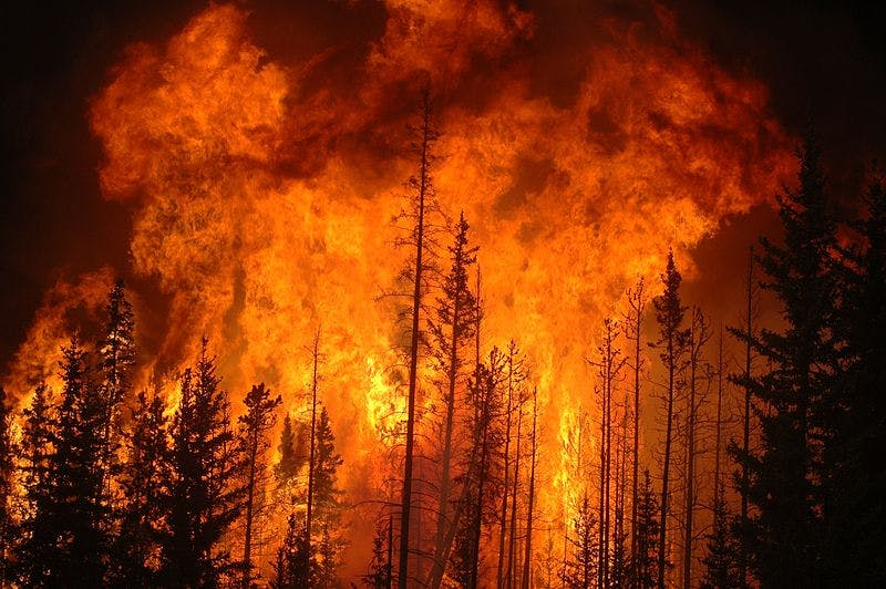 huge orange forest fire burning black pine trees