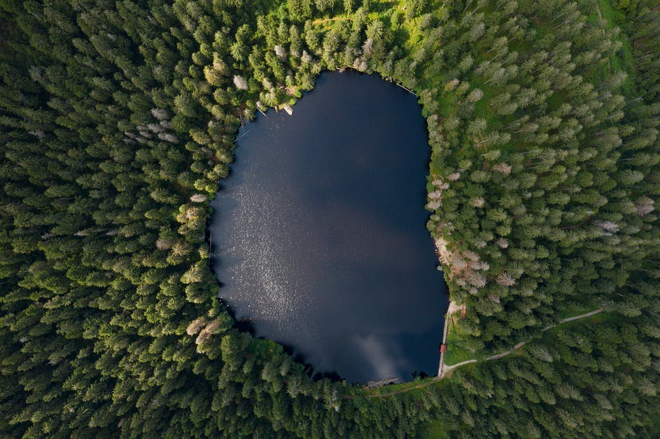 Trees lake