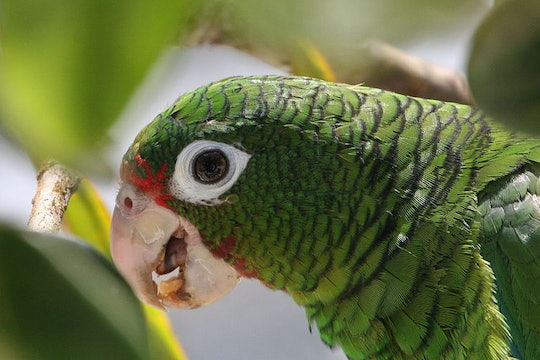 a close up of a green parrot through some leaves