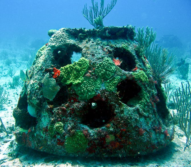 A mature growth Reef Ball creating a home for aquatic plants and animals