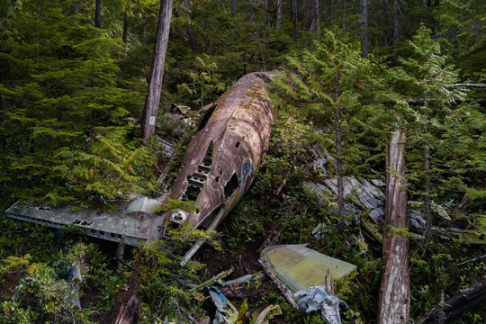 The wreckage of a plane that crashed in a forest.