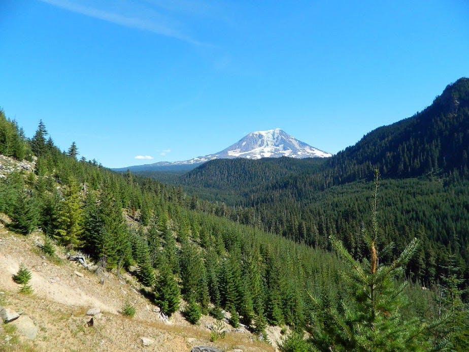 Northwest Face of Mount Adams viewed from the lower slopes of East Canyon Ridge.