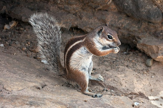a small squirrel on some rocks eating something