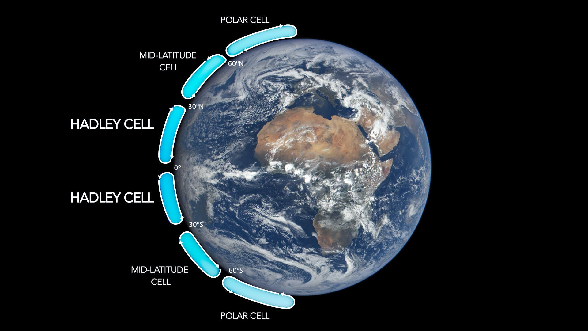 A picture of the Earth with different climate circulation cells labeled: Hadley cells, Ferrel cells, and Polar cells