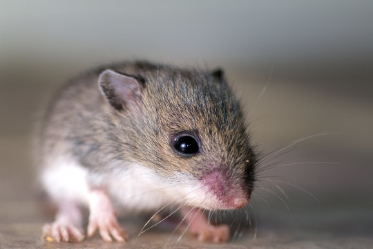 A baby mouse