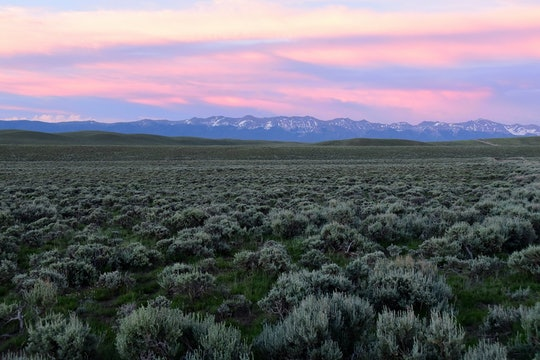 a field of pale green sagebrush in front of a mountain range at sunset