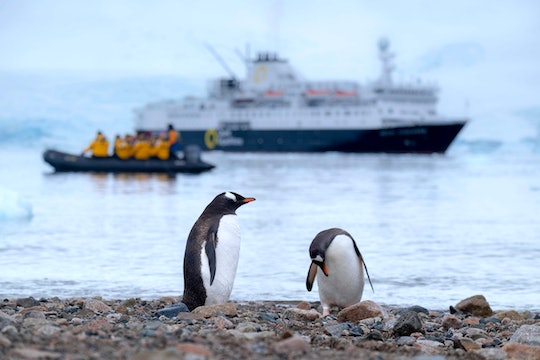 two penguins with ships in the background