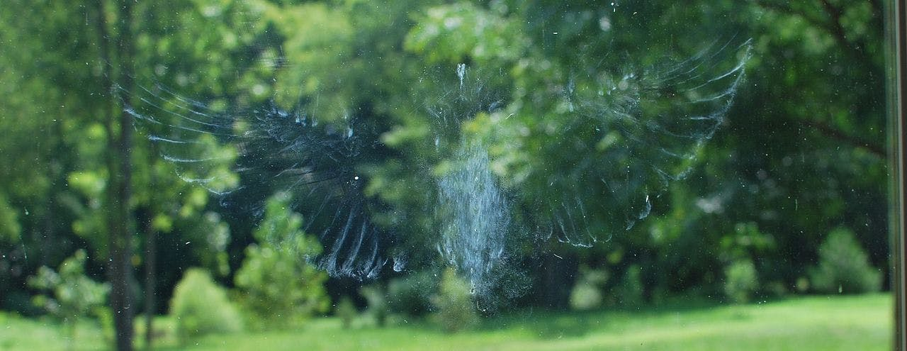 Imprint on a glass window caused by the bird flying into the window