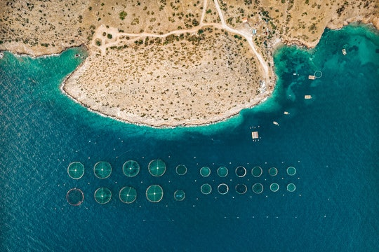 aerial photo of the coast with offshore round pens for fish