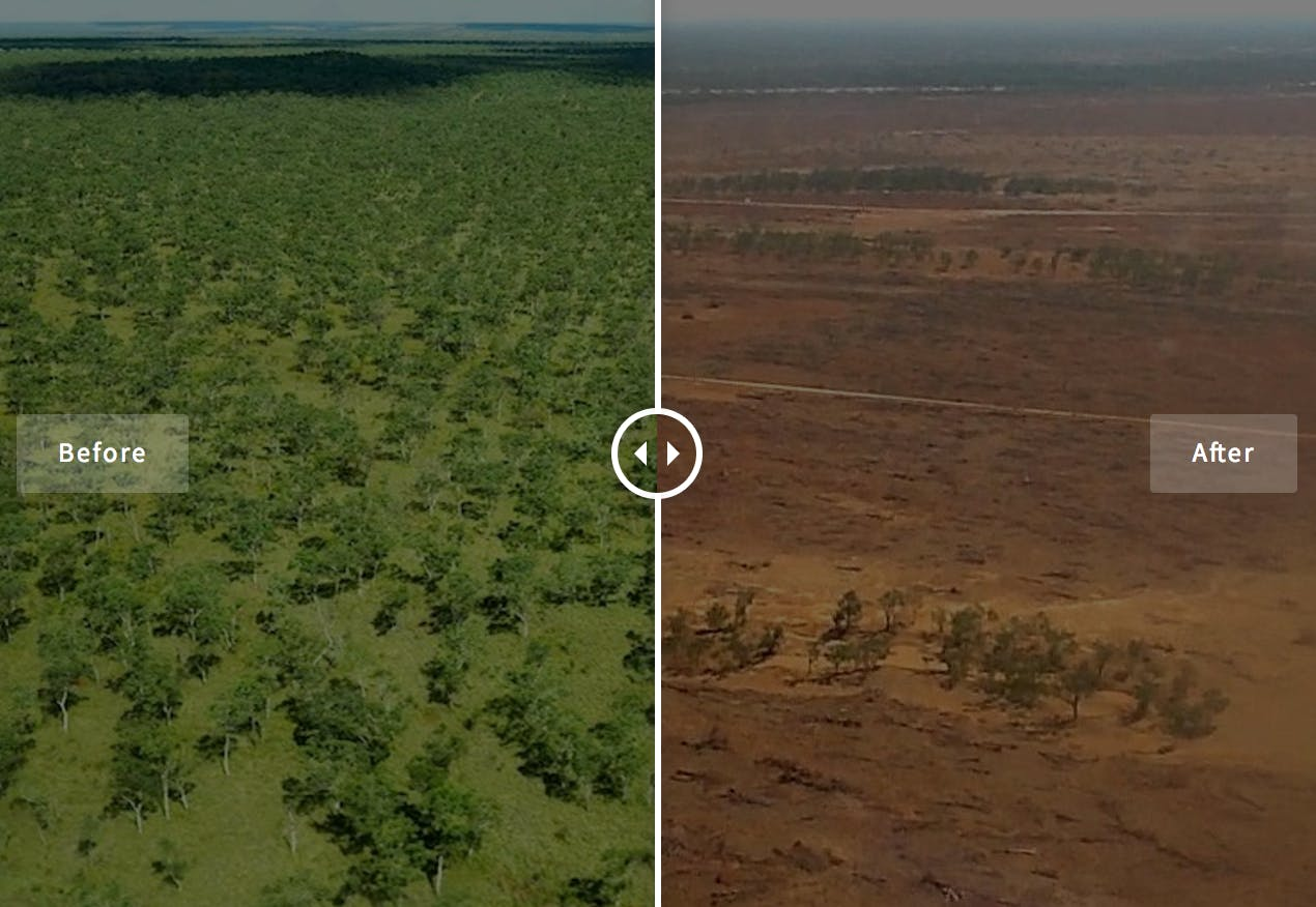 Sign the petition to halt the deforestation crisis in Australia